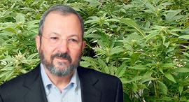 אהוד ברק קנאביס, צילום: עמית שעל