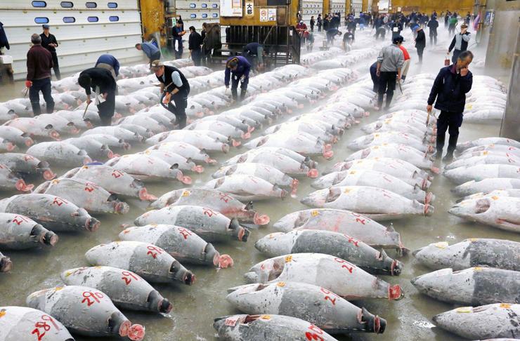 מבחר אדיר של דגי ענק