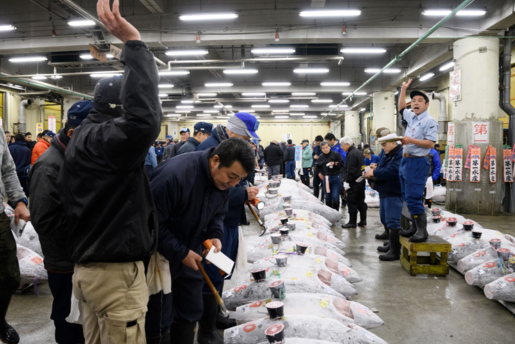 הקניינים, בעלי המסעדות, בודקים את איכות דגי הטונה המוצעים למכירה פומבית
