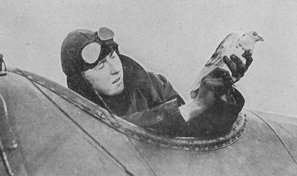יונה משולחת ממטוס במלחמת העולם הראשונה