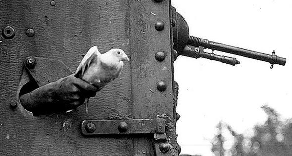 יונה משולחת מחרך ירי של טנק במלחמת העולם הראשונה