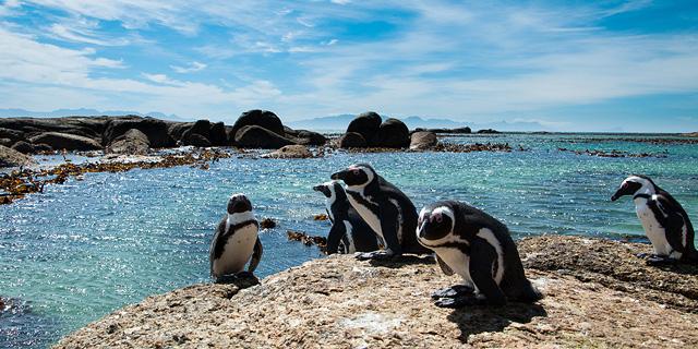 בטן, גב וארנב: איפה פוגשים חיות בר על החוף