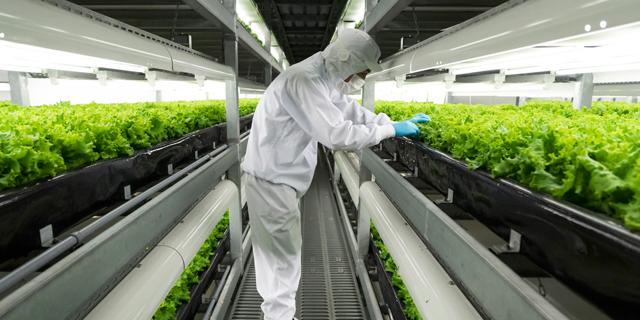 האם גידול ירקות במעבדה יכה את החקלאות המסורתית?