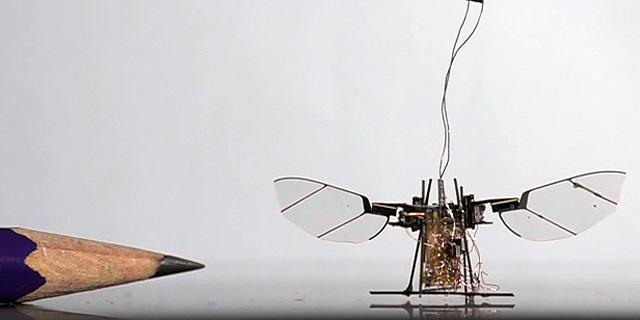 הכירו את הזבוב הרובוטי, מיקרו-רחפן שיוכל להציל חיים