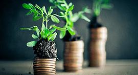 צמיחה צמחים מטבעות, צילום: 123rf.com