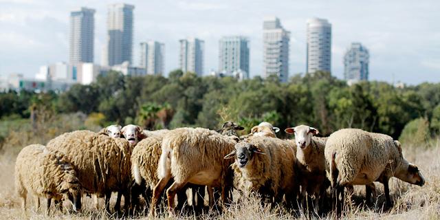 עיריית תל אביב מתכננת: חניון על חלק מפארק הירקון