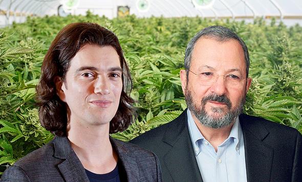 מימין אהוד ברק ו אדם נוימן קנאביס, צילום: שאטרסטוק, דן קינן, עמית שעל