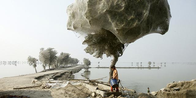 טיול שורשים: תמונות יוצאות דופן של עצים ברחבי העולם