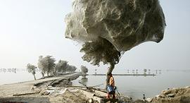 פוטו עצים קורי עכביש פקיסטן, צילום: רויטרס