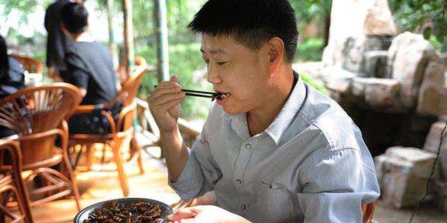משיפוד במסעדה ועד תרופות - כלכלת המקקים הפורחת של סין