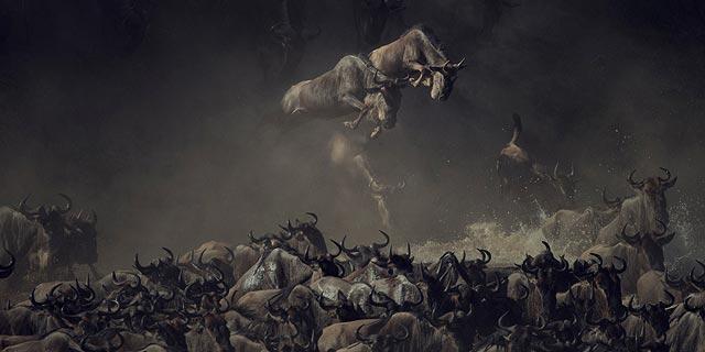 לשטוף את העיניים: התמונות הזוכות בתחרות הצילומים של נשיונל ג'יאוגרפיק