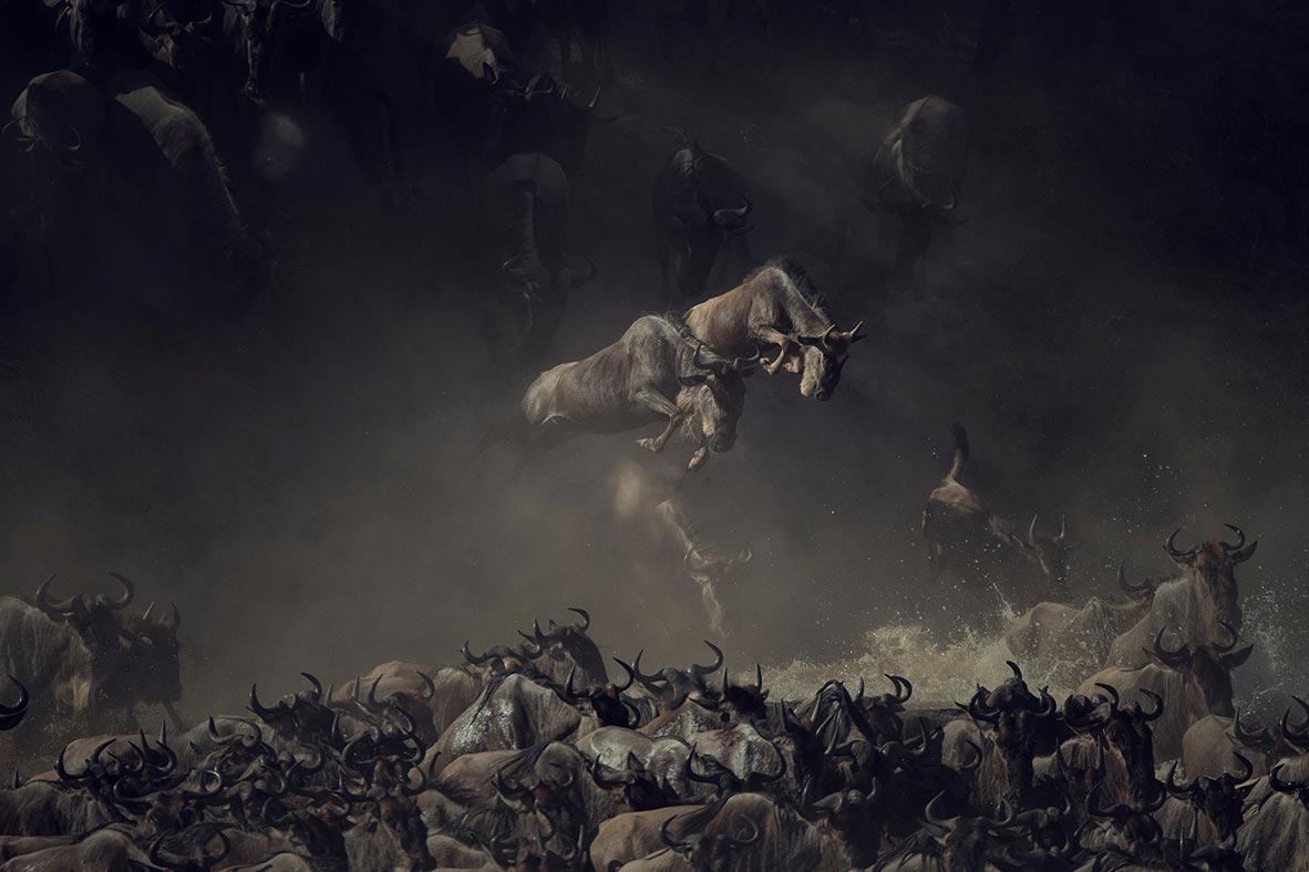 צילום: National Geographic Photo Contest
