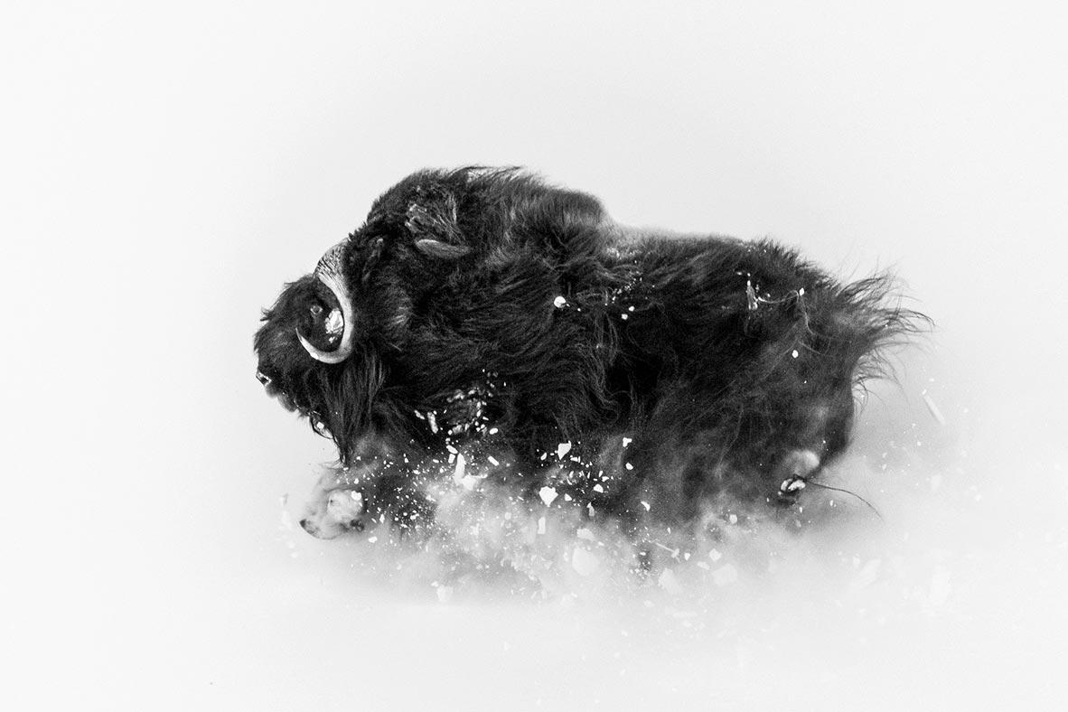 צילום: Jonas Beyer / National Geographic Photo Contest