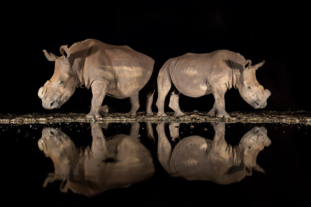 צילום: Alison Langevad / National Geographic Photo Contest