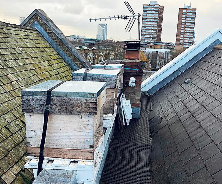 כוורות על גגות בלונדון