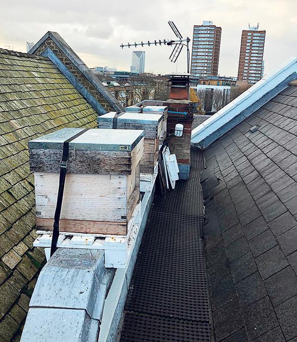 מוסף שבועי 27.11.18 מוח כוורת כוורות דבורים על גגות בלונדון, צילום: אסף לב
