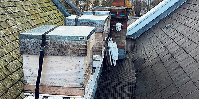 Beehives on a London rooftop. Photo: Asaf Lev