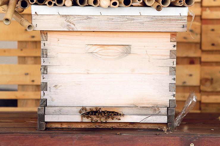 הכוורת בגג של דיזינגוף סנטר. לפחות 30% מהדבורים בעולם נכחדו ב־50 השנה האחרונות