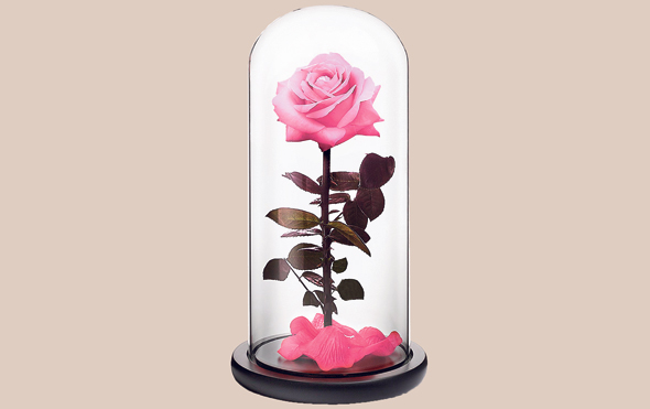ורד עם אחריות לשנה