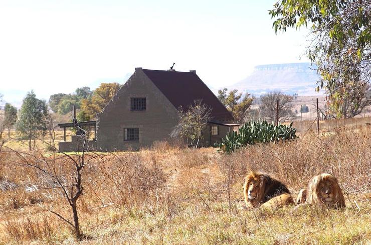 , צילום: GG Conservation