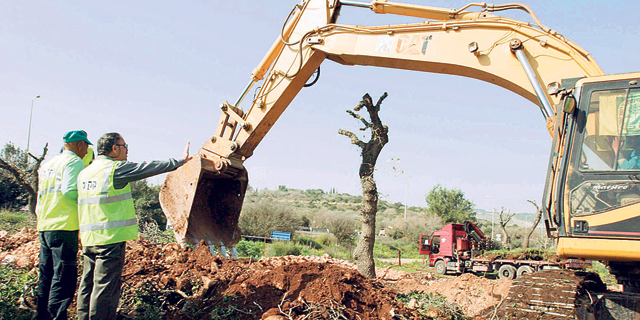בגלל האצת הבנייה: משרד החקלאות מקצר את הדרך לכריתת עצים