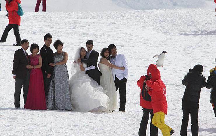 צילומי חתונה באנטרקטיקה