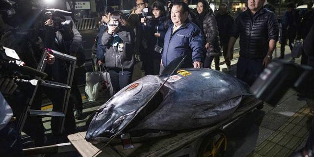 """דג יקר: טונה במשקל 278 ק""""ג נמכרה ב-3 מיליון דולר"""