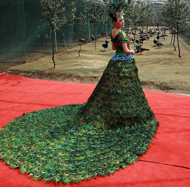 שמלת הטווס בעיצוב: ורה וונג. שנה שלמה אספו נוצות
