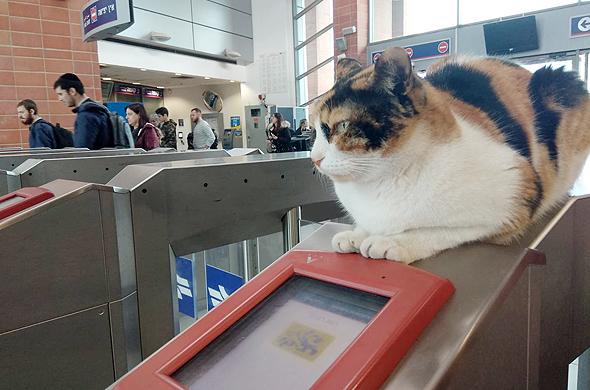 Israeli Feline Ticket Inspector Looking for New Home, Report Says