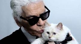 קרל לגרפלד חתולה שופט ירושה