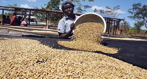 קפה נספרסו. מיישמים תוכנית סחר הוגן