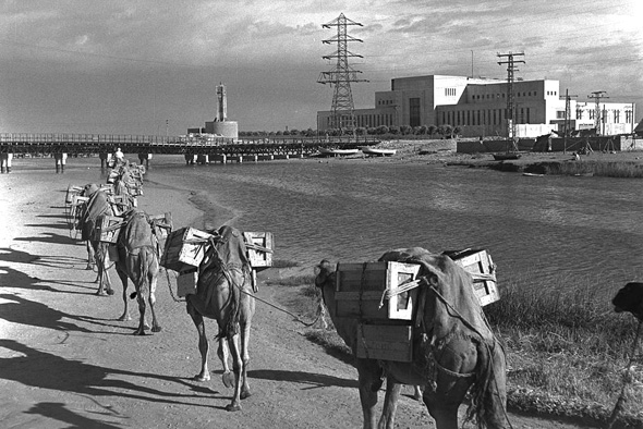 A convoy of camels near Tel Aviv's power plant. Photo: Wikimedia/GPO