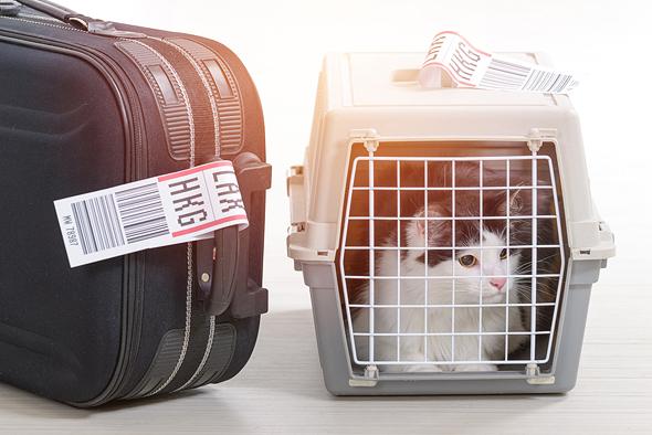 """עוברים לחו""""ל? אני בא איתכם"""