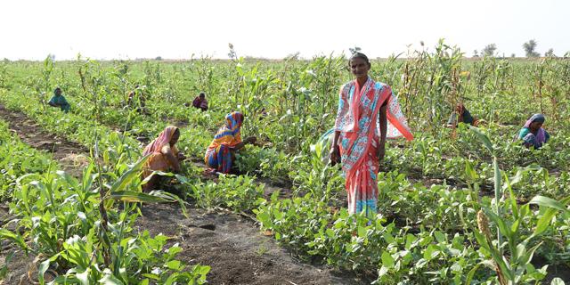 הודו תשקיע 90 מיליארד דולר בחקלאות ובמים בשנה הקרובה