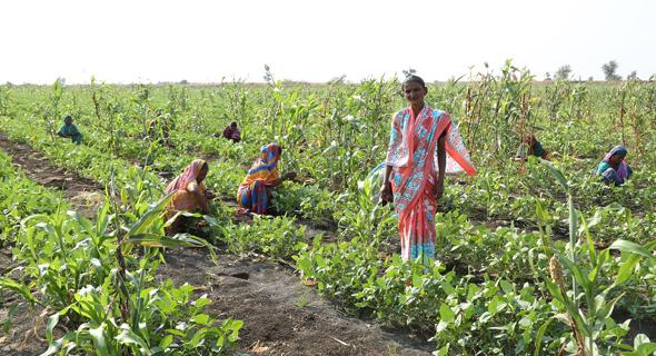שדה חקלאי בהודו. מקור הפרנסה העיקרי בתת היבשת, צילום: רן מידן: דיויד גרב