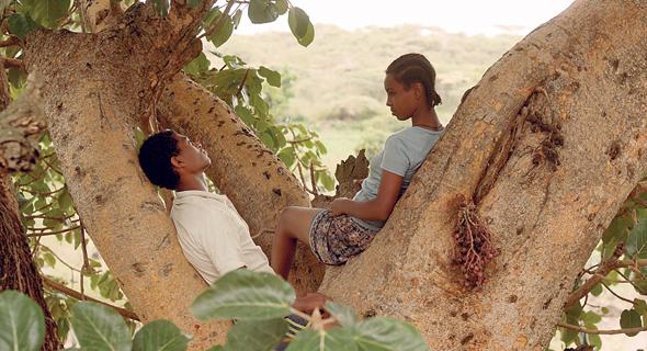 מתוך ״עץ תאנה״