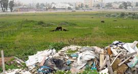 פסולת בניין, צילום: יובל חן