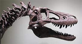 דינוזאור טי-רקס תינוק למכירה ב-Ebay, צילום: Ebay