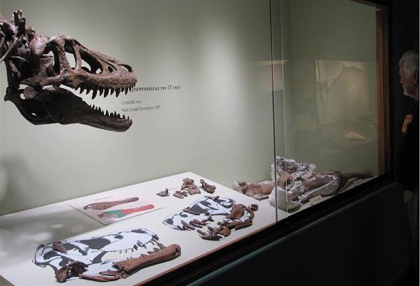 דינוזאור טי רקס למכירה איביי 2, צילום: Ebay