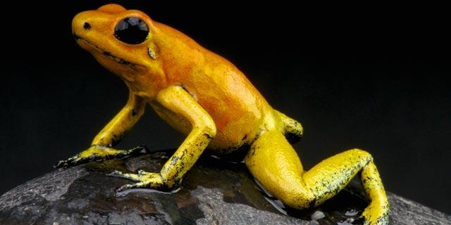 ראו הוזהרתם: בעלי החיים הכי מסוכנים בעולם
