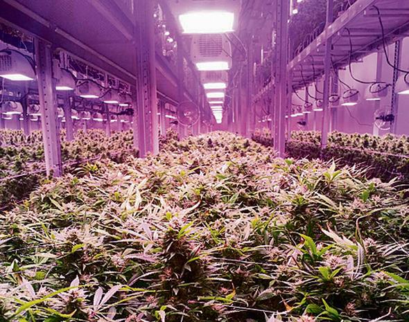 """חוות הגידול """"שדה"""" במקדוניה"""