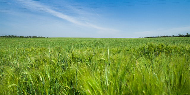"""קבוצת אייזנברג: """"שימו עין על הרצליה ורעננה להשקעה בקרקע חקלאית"""""""