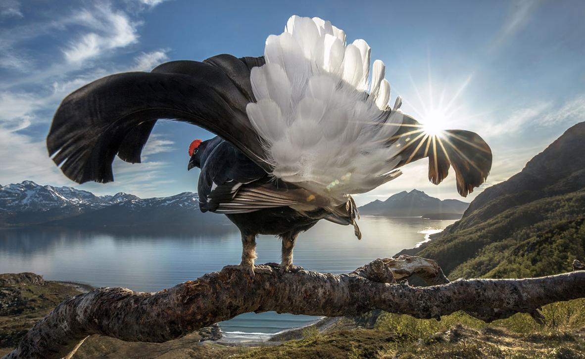 צילום: Audun Rikardsen / BigPicture Photography Competition
