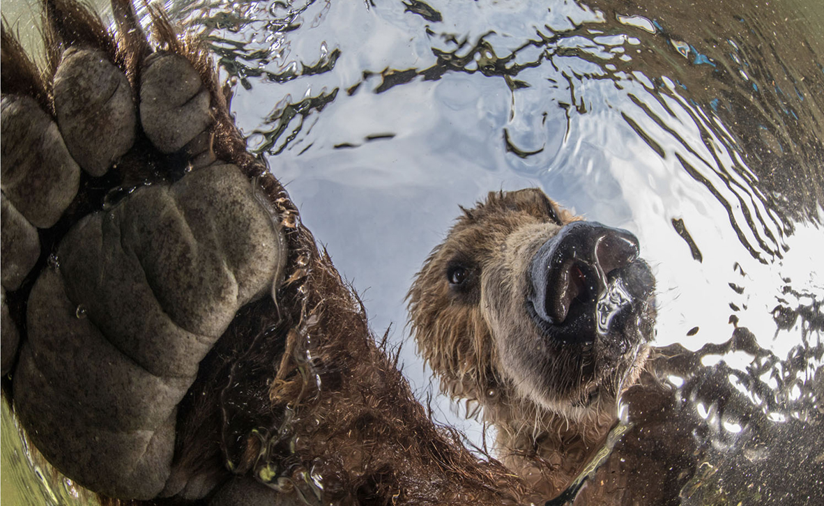 צילום: Mikhail Korostelev / BigPicture Photography Competition