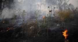 שריפה בבן שמן, צילום: AP