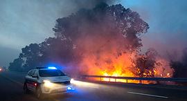 שריפה ליד קיבוץ הראל, צילום: אי פי איי