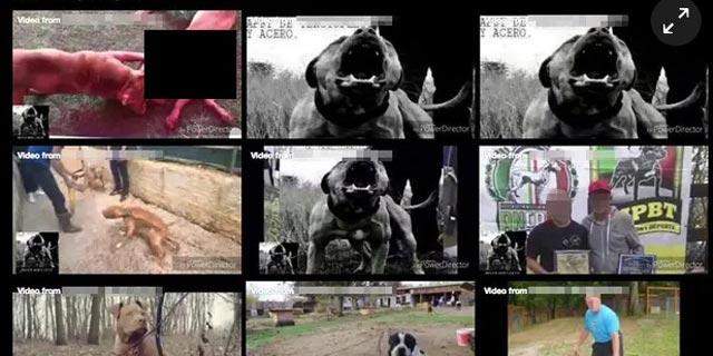 """פעילי זכויות בע""""ח זועמים: פייסבוק מאפשרת קידום קרבות כלבים"""