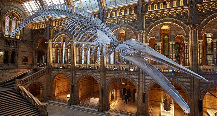 מקום 9. מוזיאון הטבע Natural History Museum לונדון