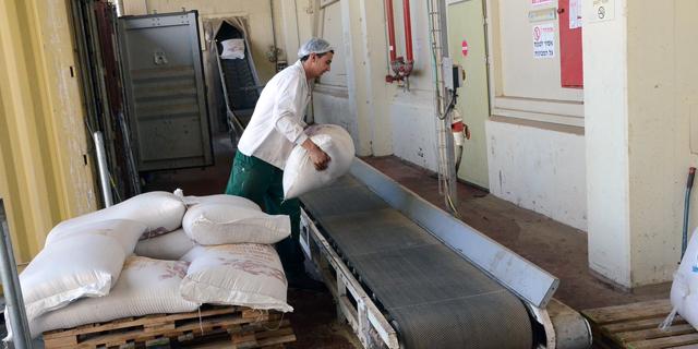 ייצור טחינה במפעל בארכה. חומר גלם בשורה של מוצרי מזון נוספים, צילום: באדיבות בארכה