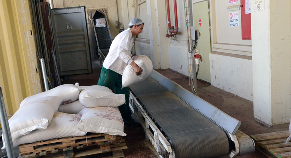 ייצור טחינה במפעל בארכה. חומר גלם בשורה של מוצרי מזון נוספים